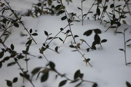 Seine-Maritime, février 2012 : la neige
